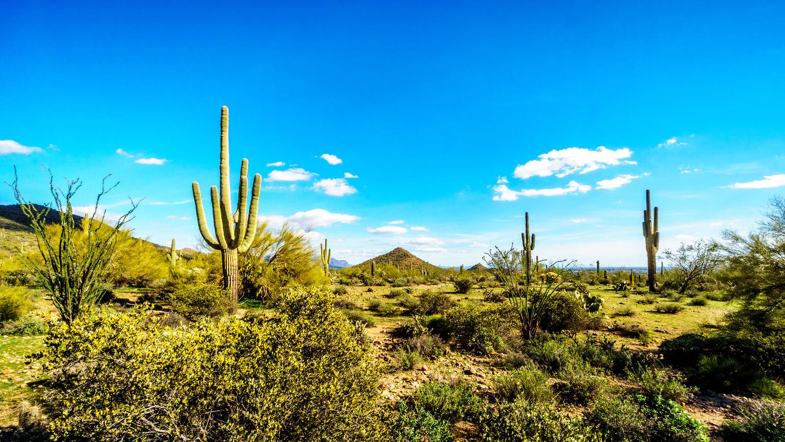 Tucson Insurance Quotes